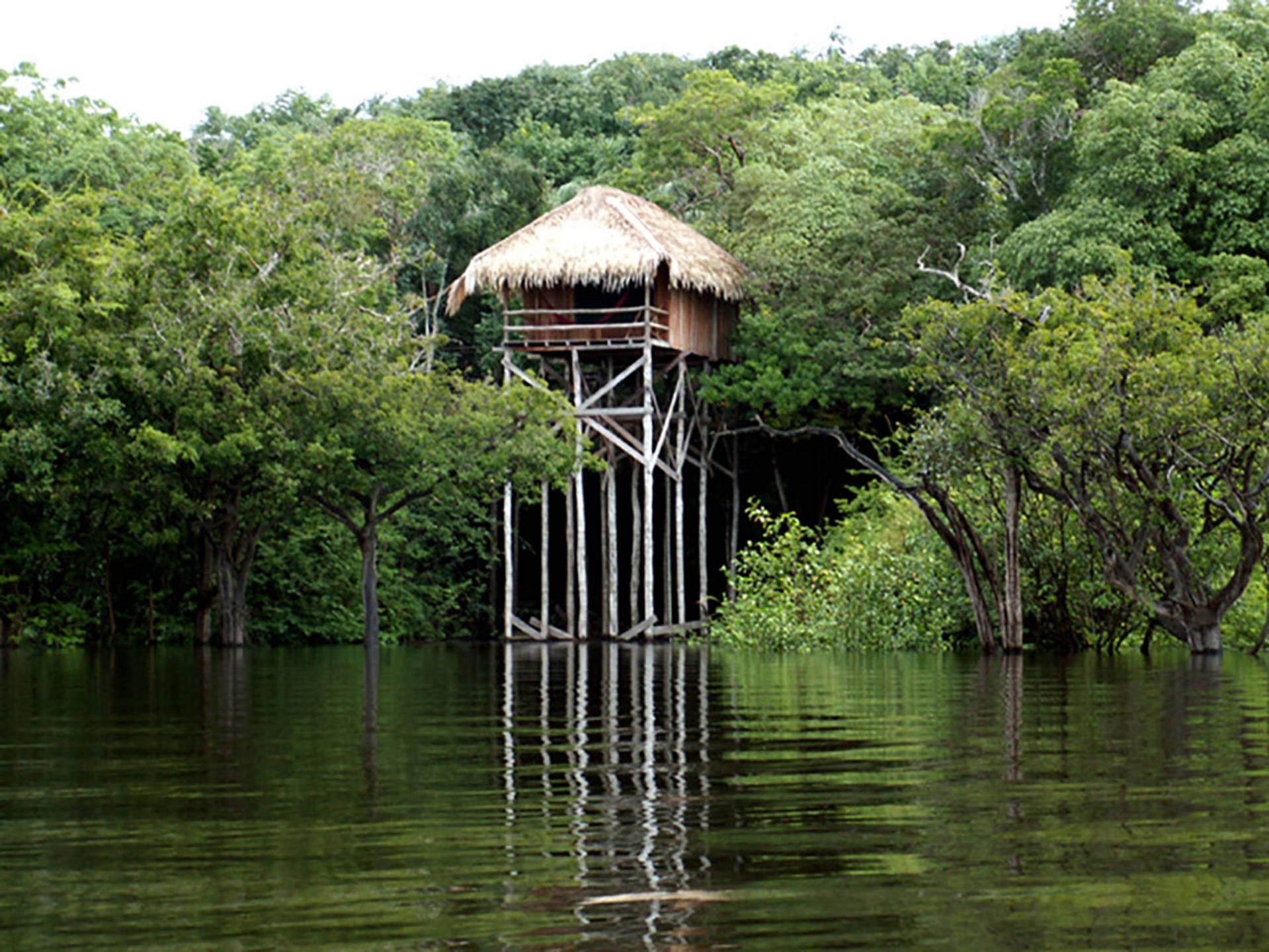 Juma lodge manaus promobrasil tour operator brasile for Amazon casa